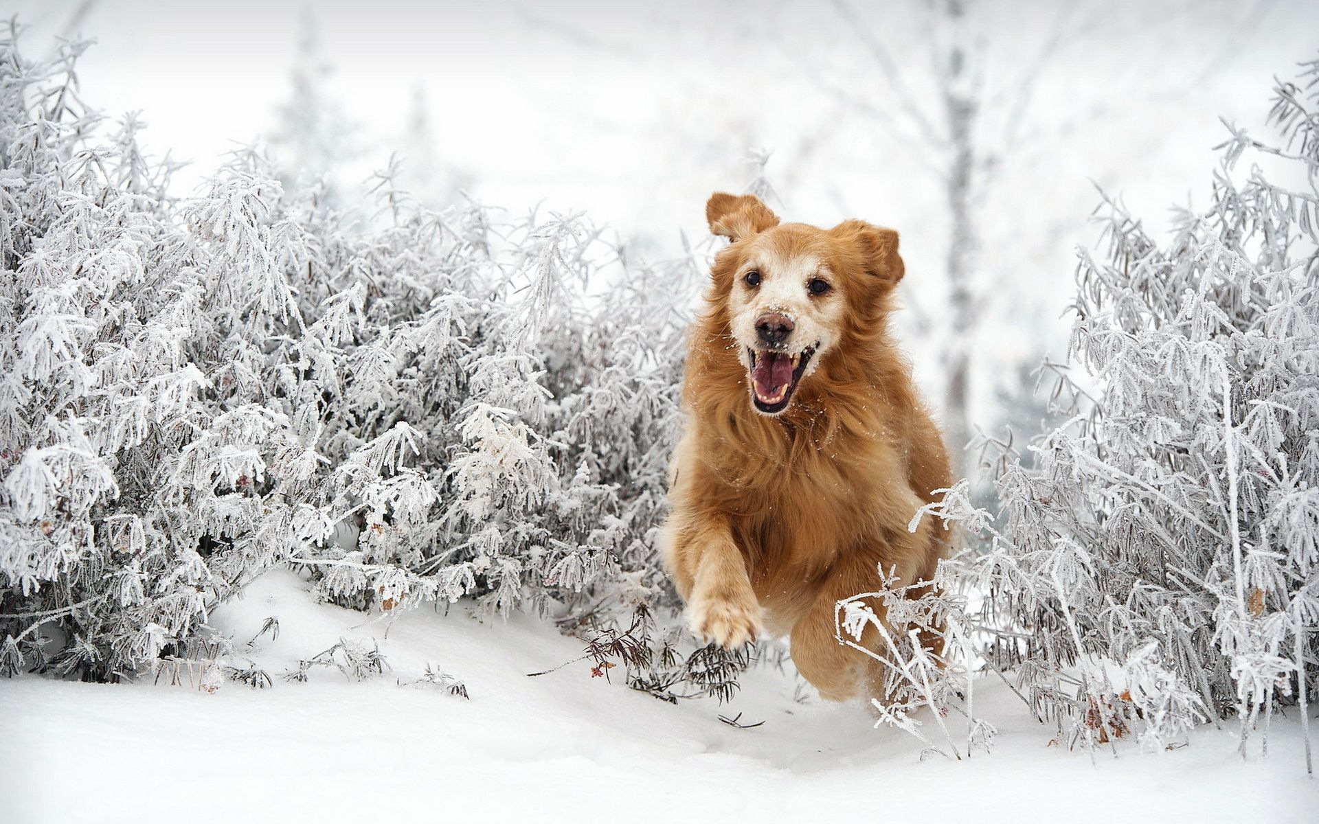 keeping dogs exercised an entertained through the winter | pet