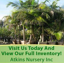 Nursery Fallbrook Ca Atkins Inc The Peacefield Farms Guy