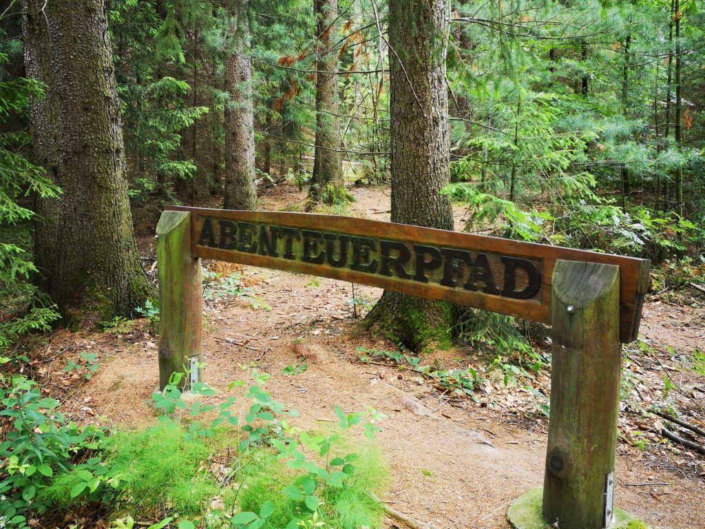 Wandern Im Tharandter Wald