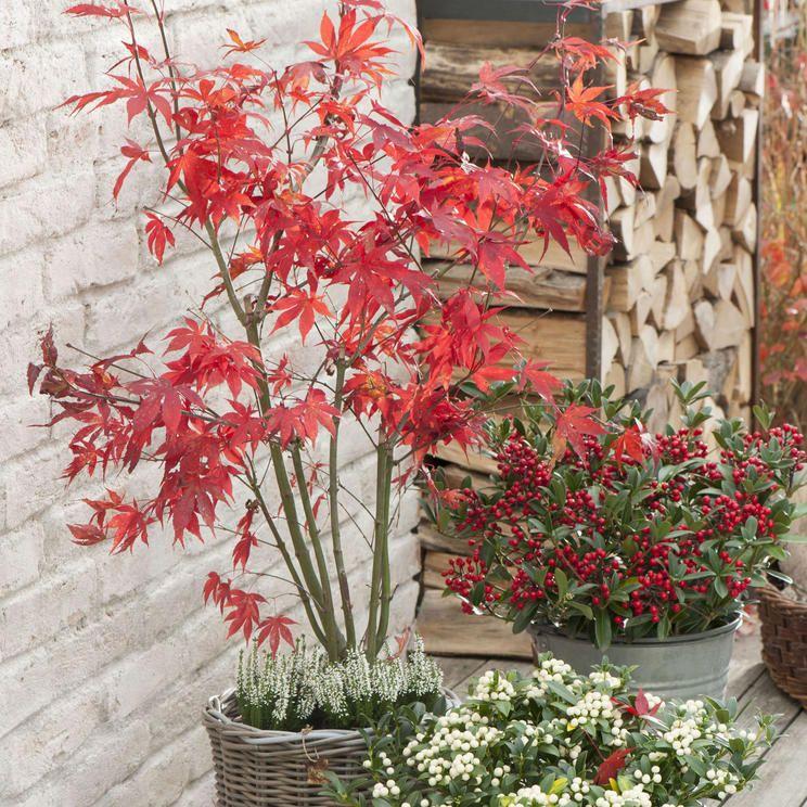 Winterharte Kubelpflanzen 20 Bewahrte Arten In 2020 Kubelpflanzen Pflanzen Kubelpflanzen Winterhart