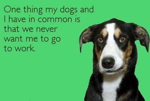 Pin By Courtney Nelon On Vettech Animal Rights Dog Quotes Dog Person Ecards Funny