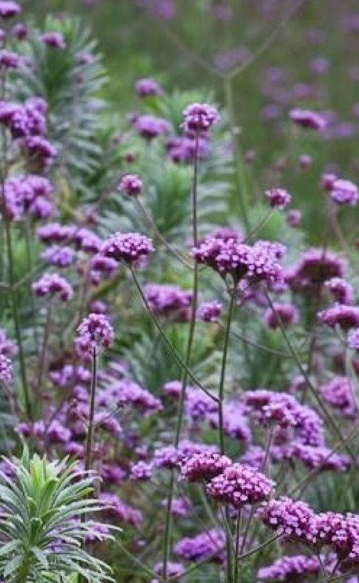 Épinglé par Gina Doyle sur Garden stuff | Pinterest
