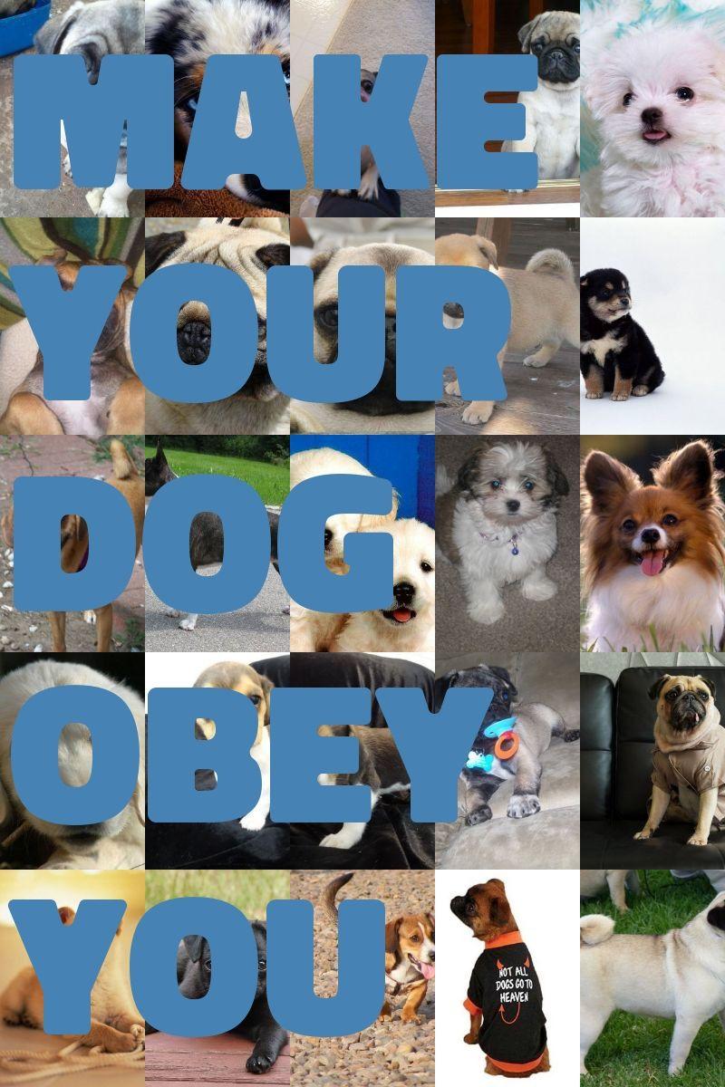 Consider On Low Maintenance Dog Breeds Low maintenance