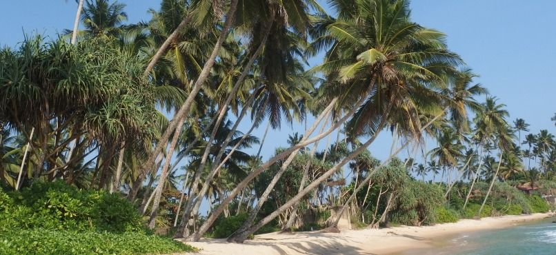 sri lanka trees beach dickwella Visit us : www.bornvoyager.com   Contact us +91 80404 60000