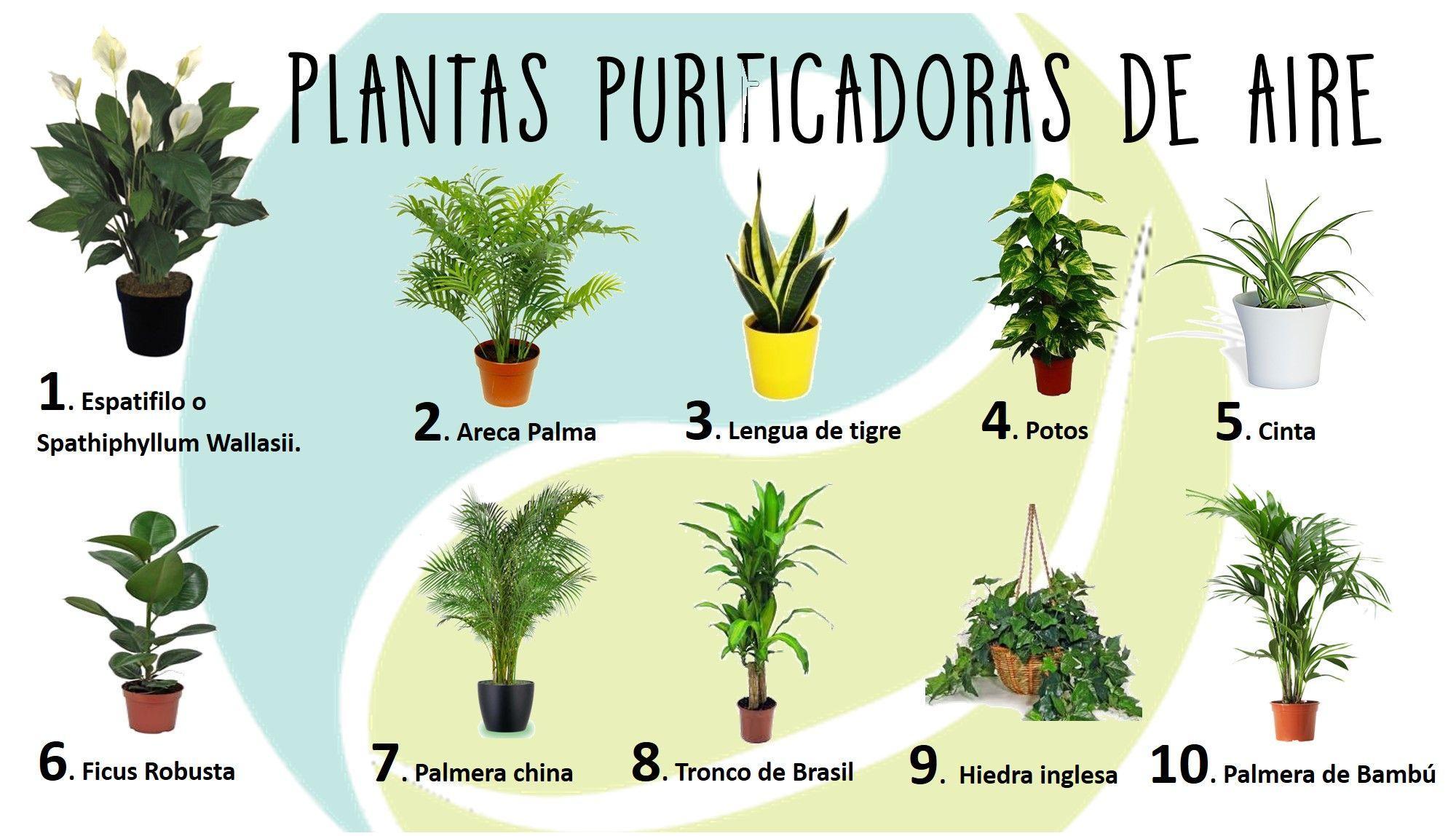 Plantas purificadoras de aire blog de ifeel maps a for Plantas de aire