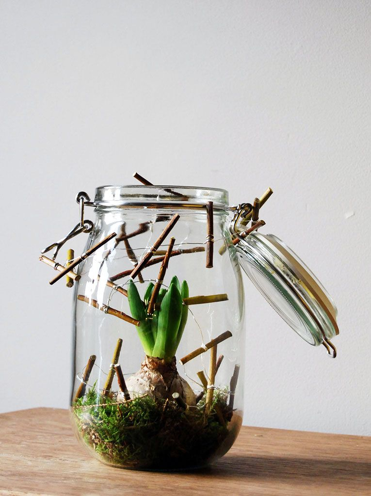 Weckpot met hyacint