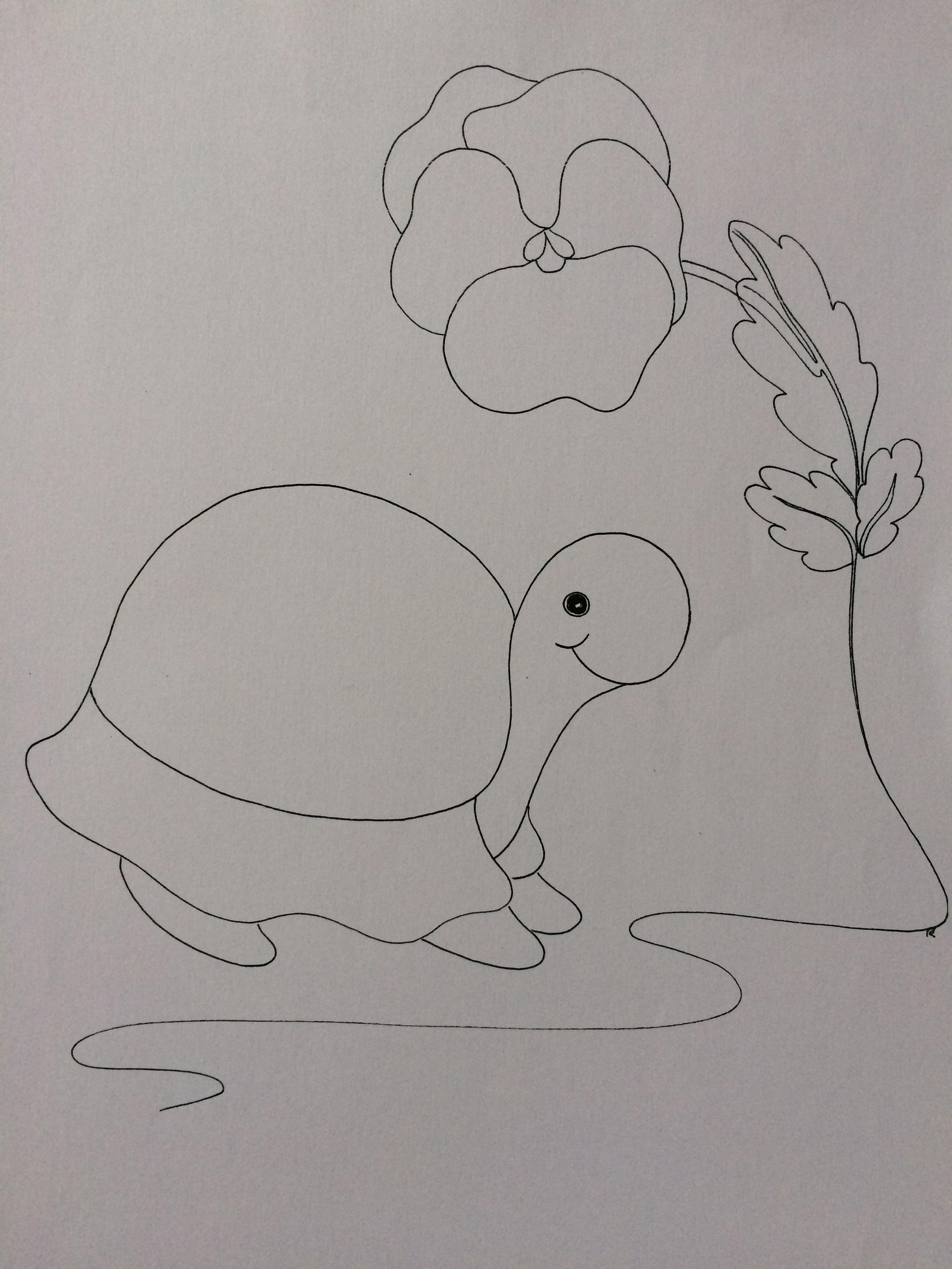 Schildpad Kleurplaten Schildpad