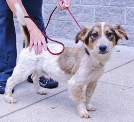 Adopt Paul Giamatti On Dog Adoption Border Collie Dog Dogs