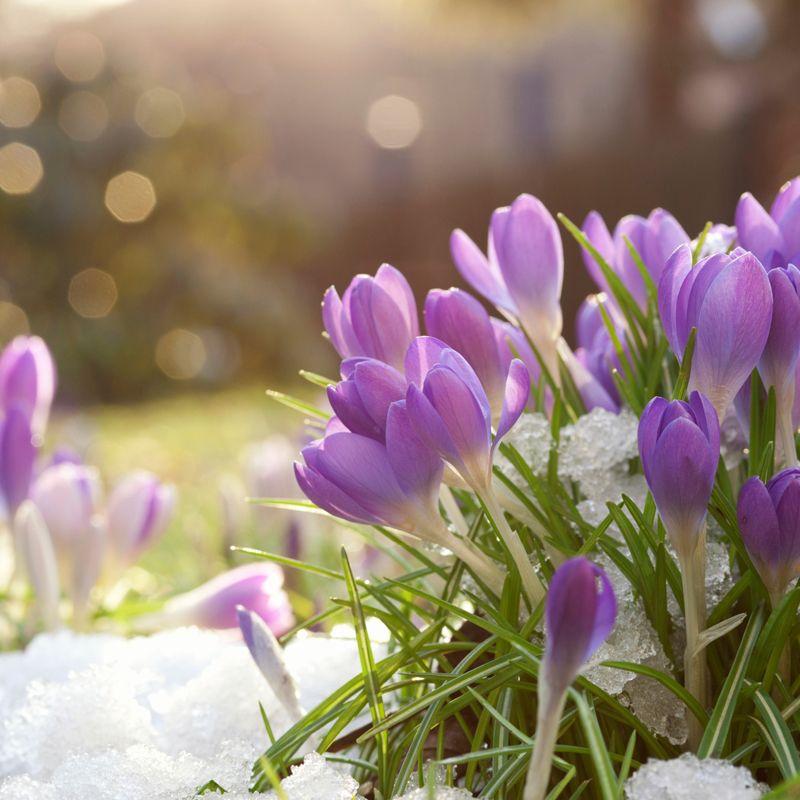 номере красивые весенние фото март достаточно спокойный