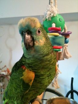 Nuts For Feathered Friends Rescue Nuts For Birds Nuts Com Parrot Rescue Your Pet Parrot