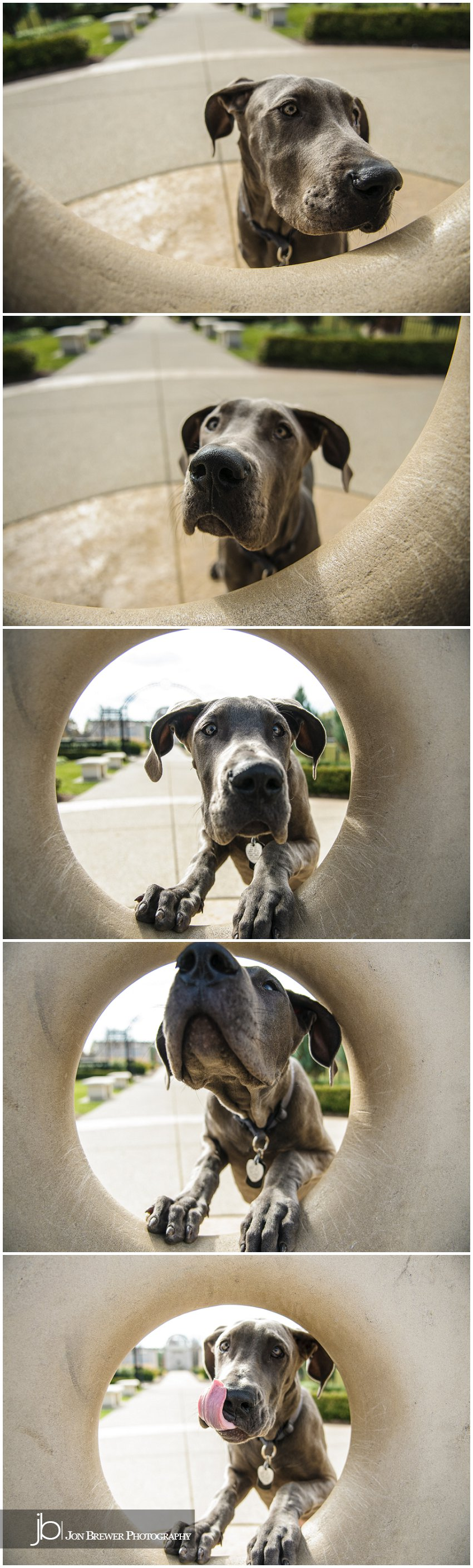 Becky & Luna Carmel, Indiana Pet Photography Great