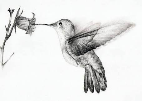 Colibri Tatuaje Disenos