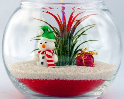 Holiday Christmas Terrarium With