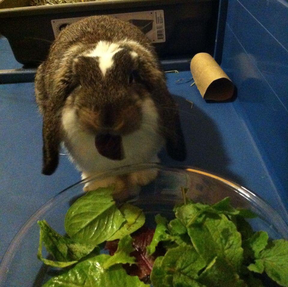 Idea By Jennifer Allison On Bunny Board Bunny Rabbit Animals