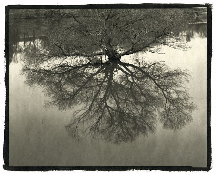 Näyttelyt › Nobuyuki Kobayashi: Portrait of Nature–Myriads of God | Pohjoinen Valokuvakeskus | Northern Photographic Centre