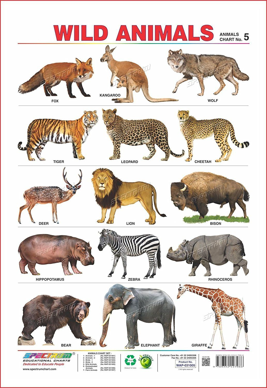 Set Of 5 Educational Wall Charts Domestic Animals Wild