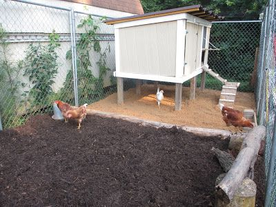 30dirtytoes Chicken Beach Chicken Diy Chicken Coop Chickens