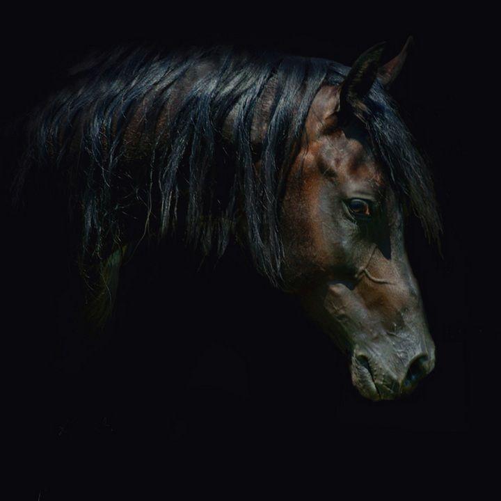 Арабские скакуны. Красивые фото лошадей… (30 фото ...