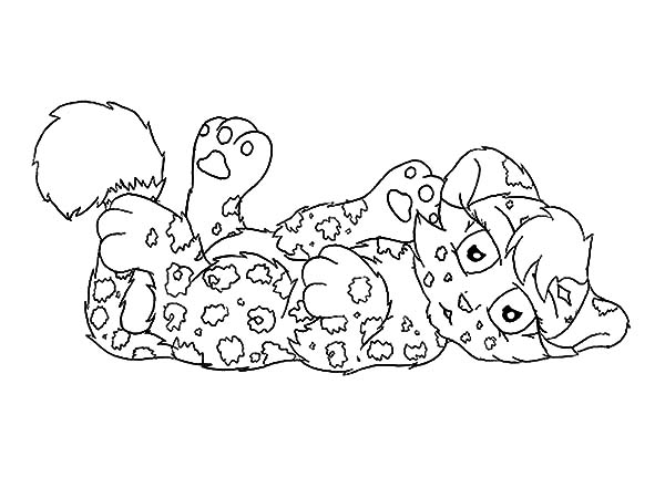 Pin On Jaguar Coloring Pages