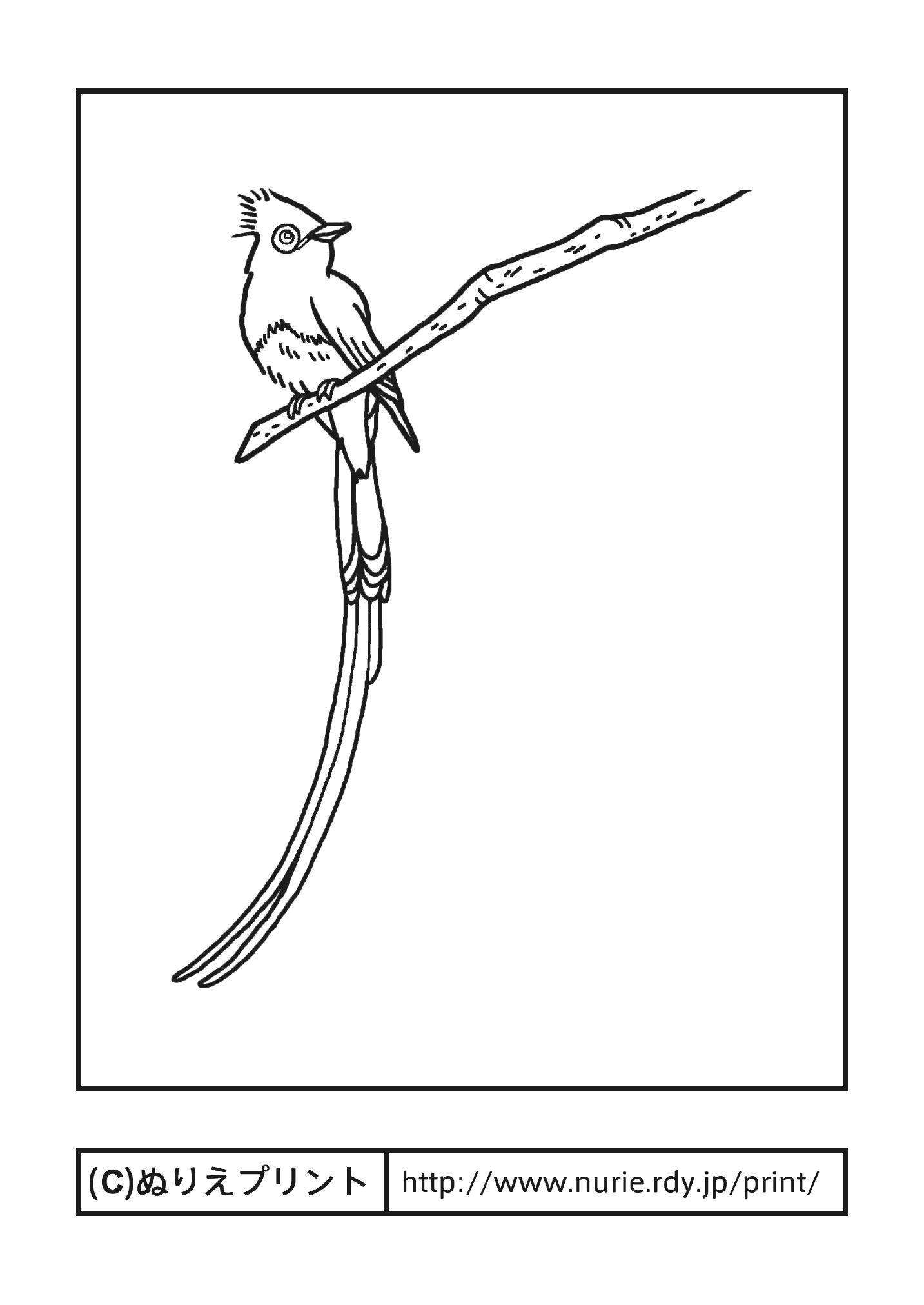 サンコウチョウ三光鳥主線黒静岡県の鳥無料塗り絵都道府県