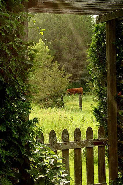 """""""Through the Garden Fence"""" by Nest Pretty Things on Flickr. Photo taken in Charlotte, Vermont."""