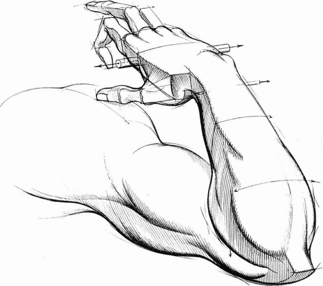 Cartoon Arm Drawing | Anatomía (Extremidades Superiores) | Pinterest ...