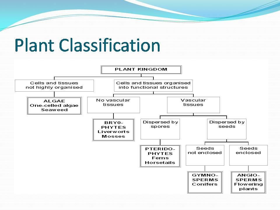 plant diversity flow chart | Plant classification, Plants