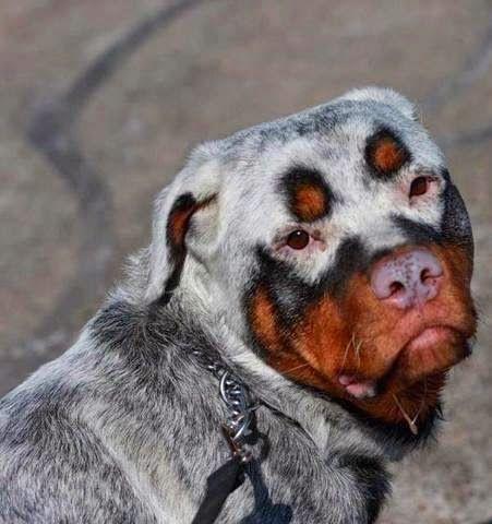 Bilderesultat for amazing fur animal