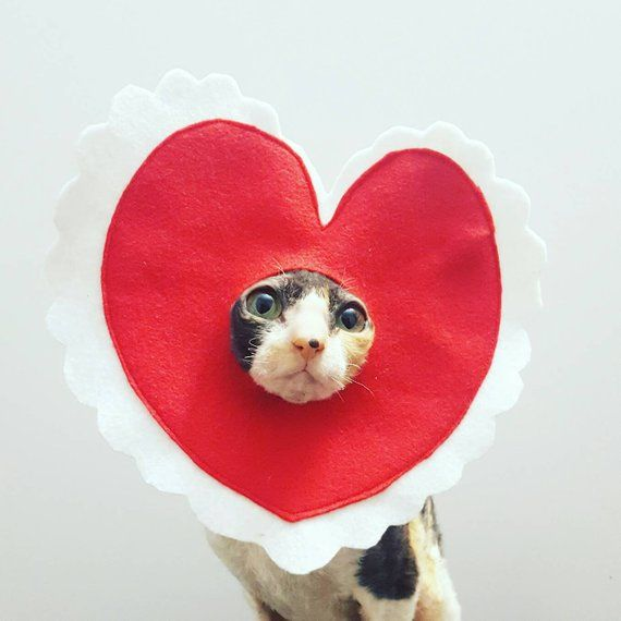 Valentine Pet Costume For Cats Dogs And Pets Of Pet Costumes