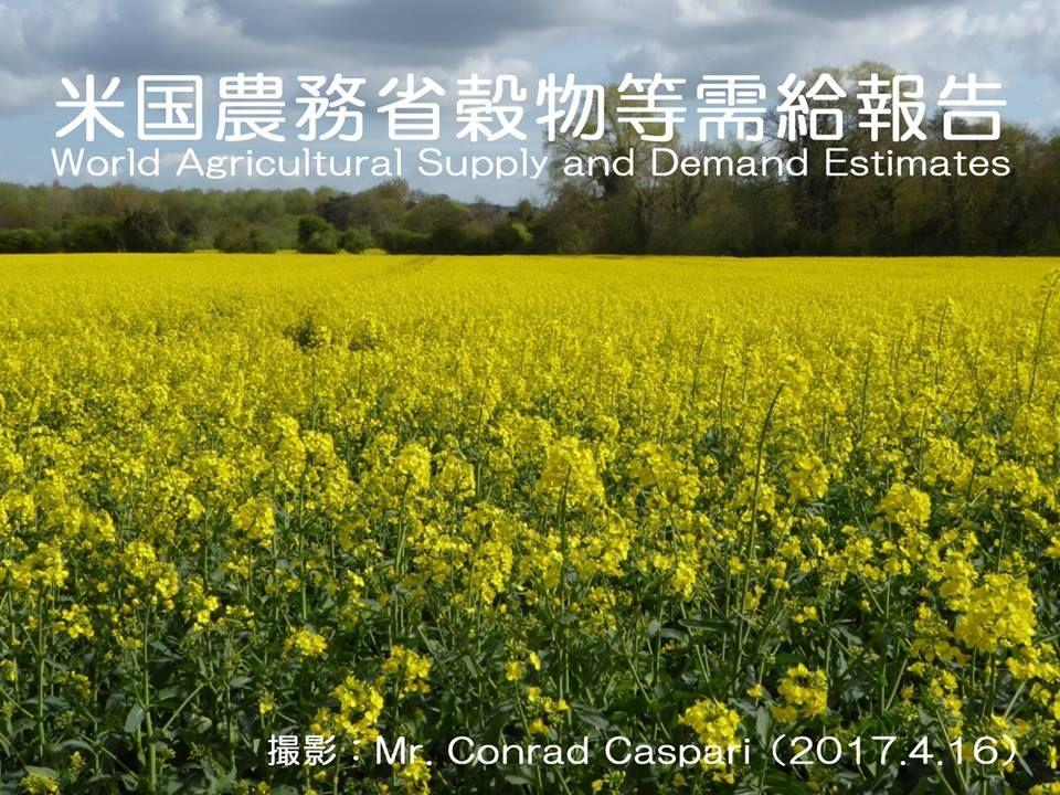 米国農務省穀物等需給報告を公表   http://subaru25.official.jp/overseas-food-supply-and-demand-information-336/
