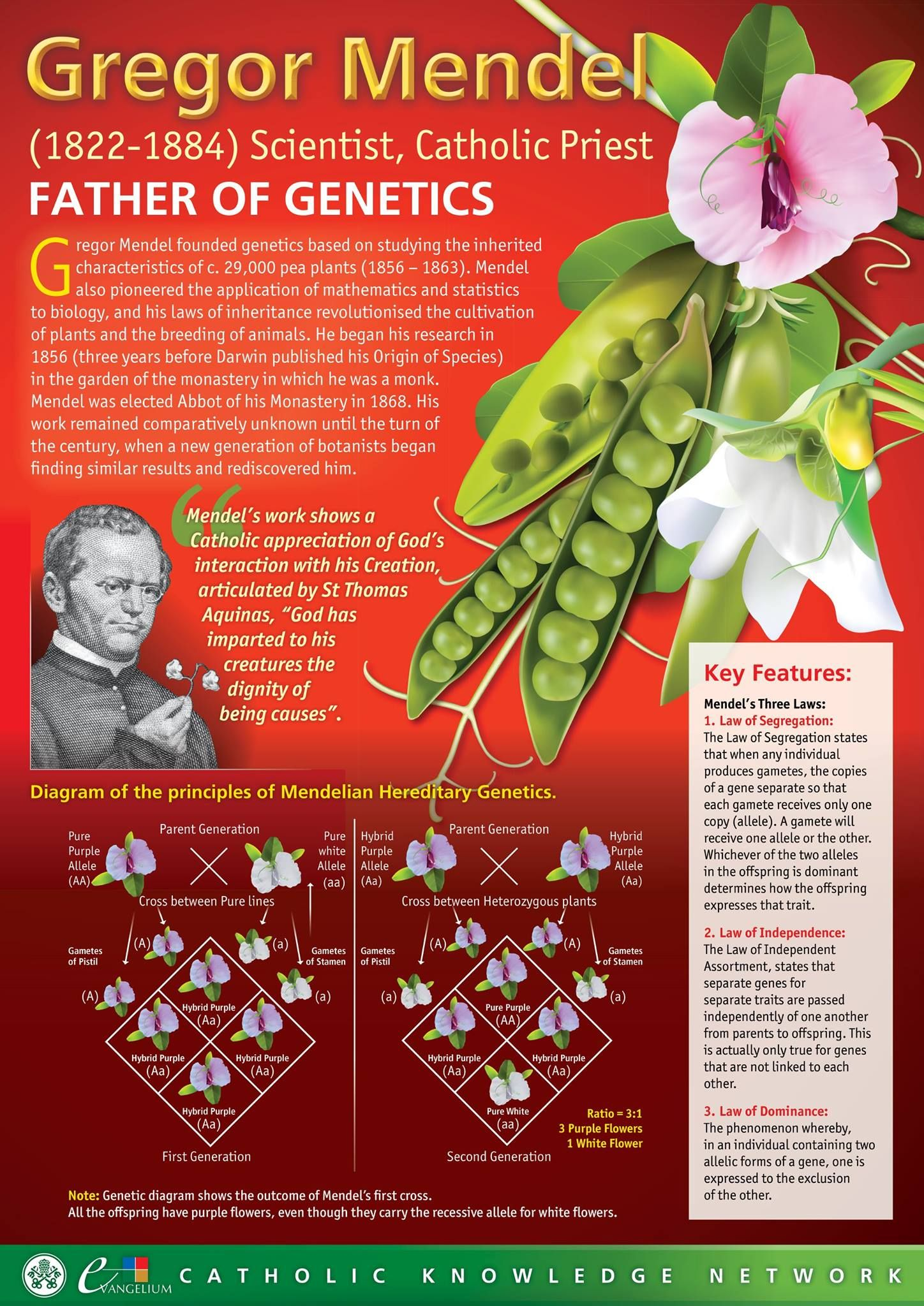 Gregor Mendel Catholic Priest Father Of Genetics