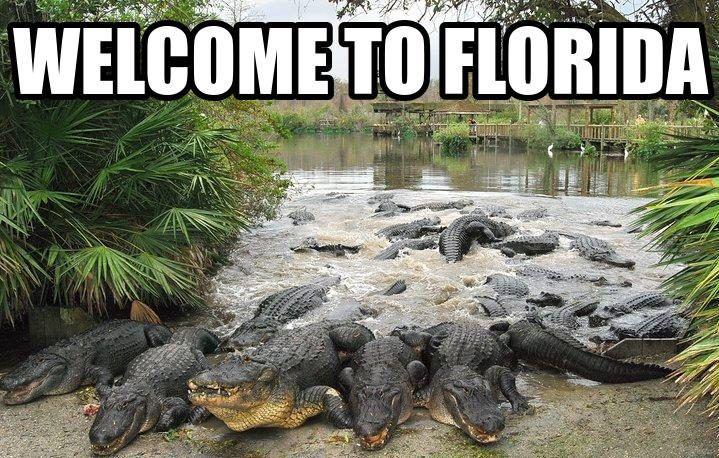 Funny Florida Meme 20 Florida Florida Florida Funny Memes