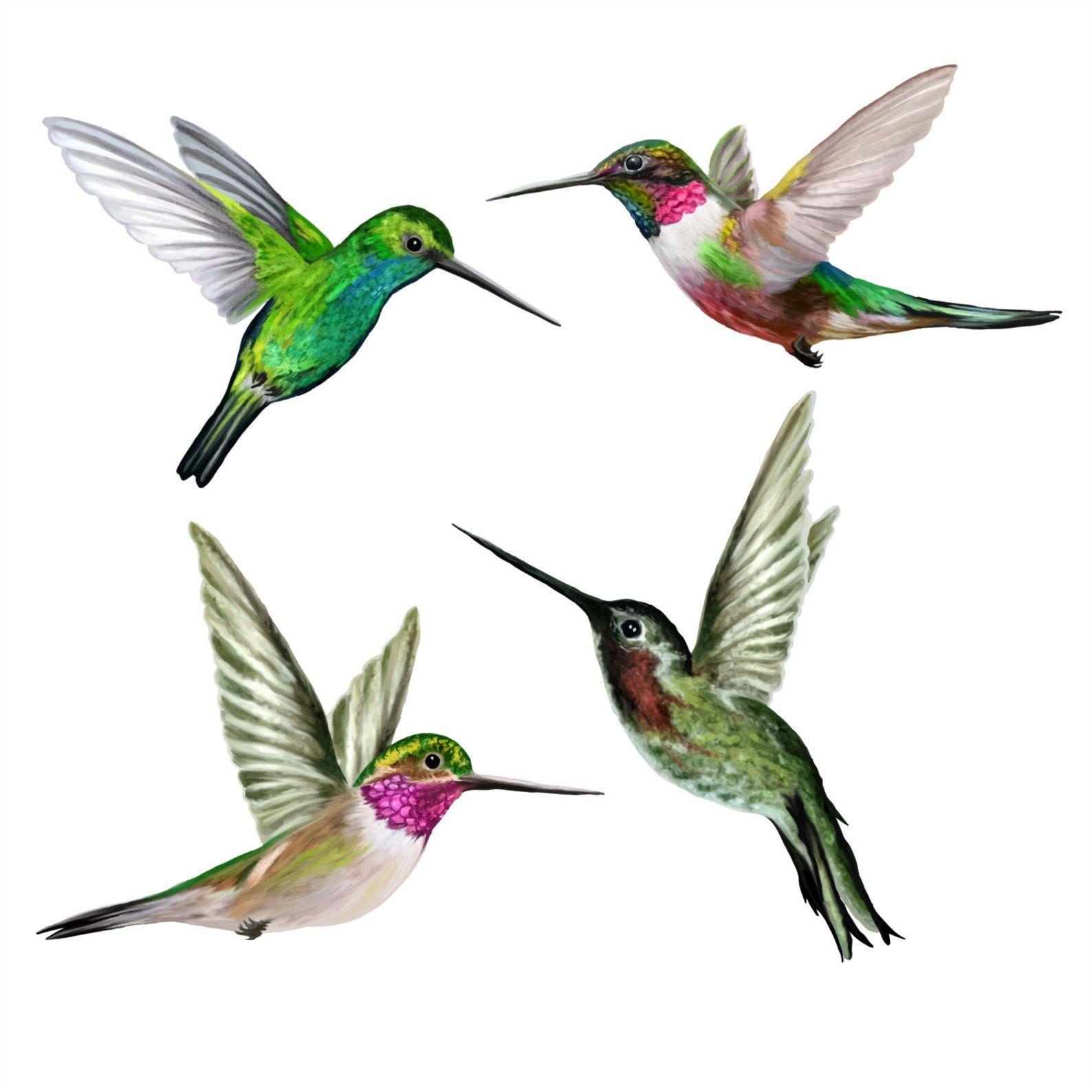 Hummingbirds Window Clings Set Of 4 Anti Collision Window