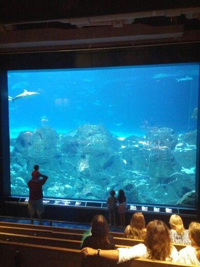 Adventure Aquarium | Places we have been  | Aquarium