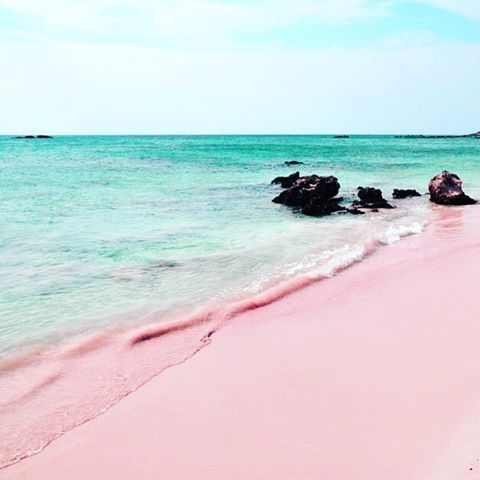 Pink beach komodo island indonesia wanderlust go for Bahamas pink sand beach