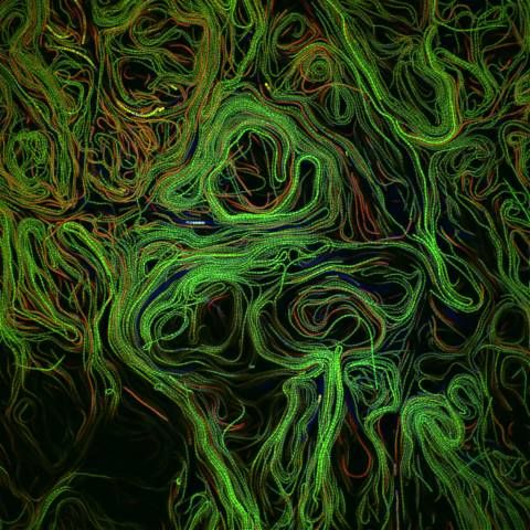 Algae biofilm | 2011 Photomicrography Competition | Nikon Small World