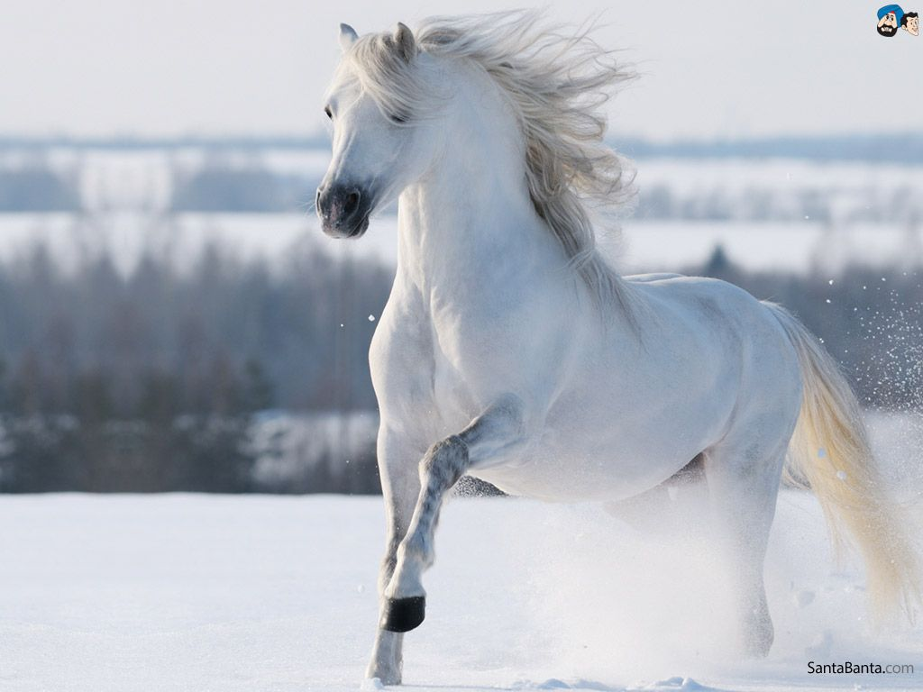 Amazing Wallpaper Horse Snow - c5885542c50a5e5151f0b02a04c6030f  Collection_59871.jpg