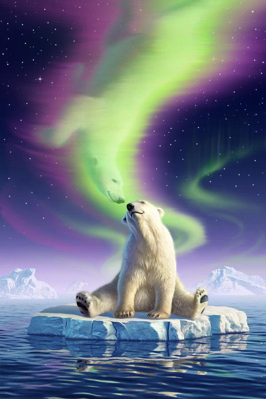 Polar bear floating around under the northern lights.