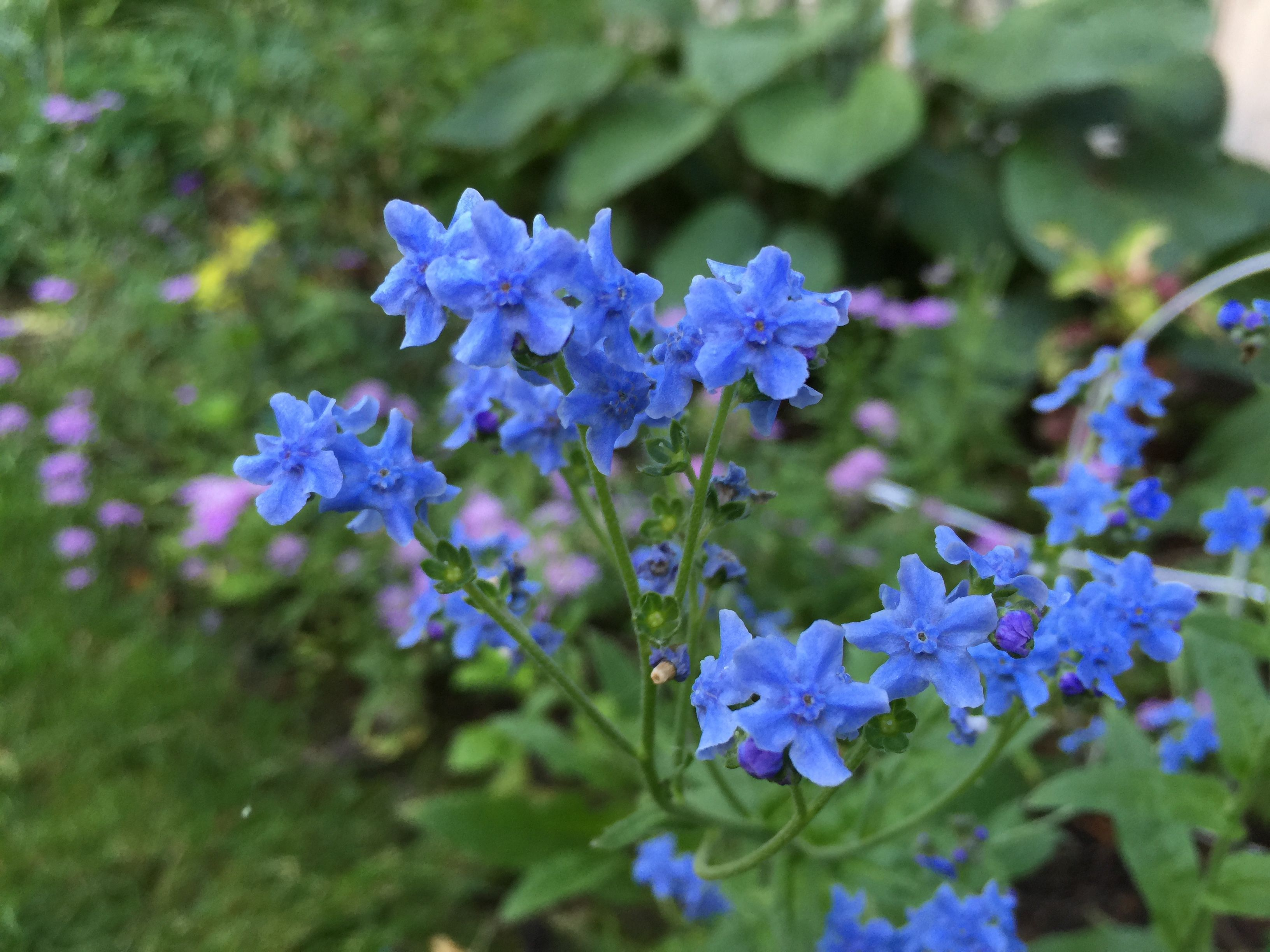 may be annual or perennial plants