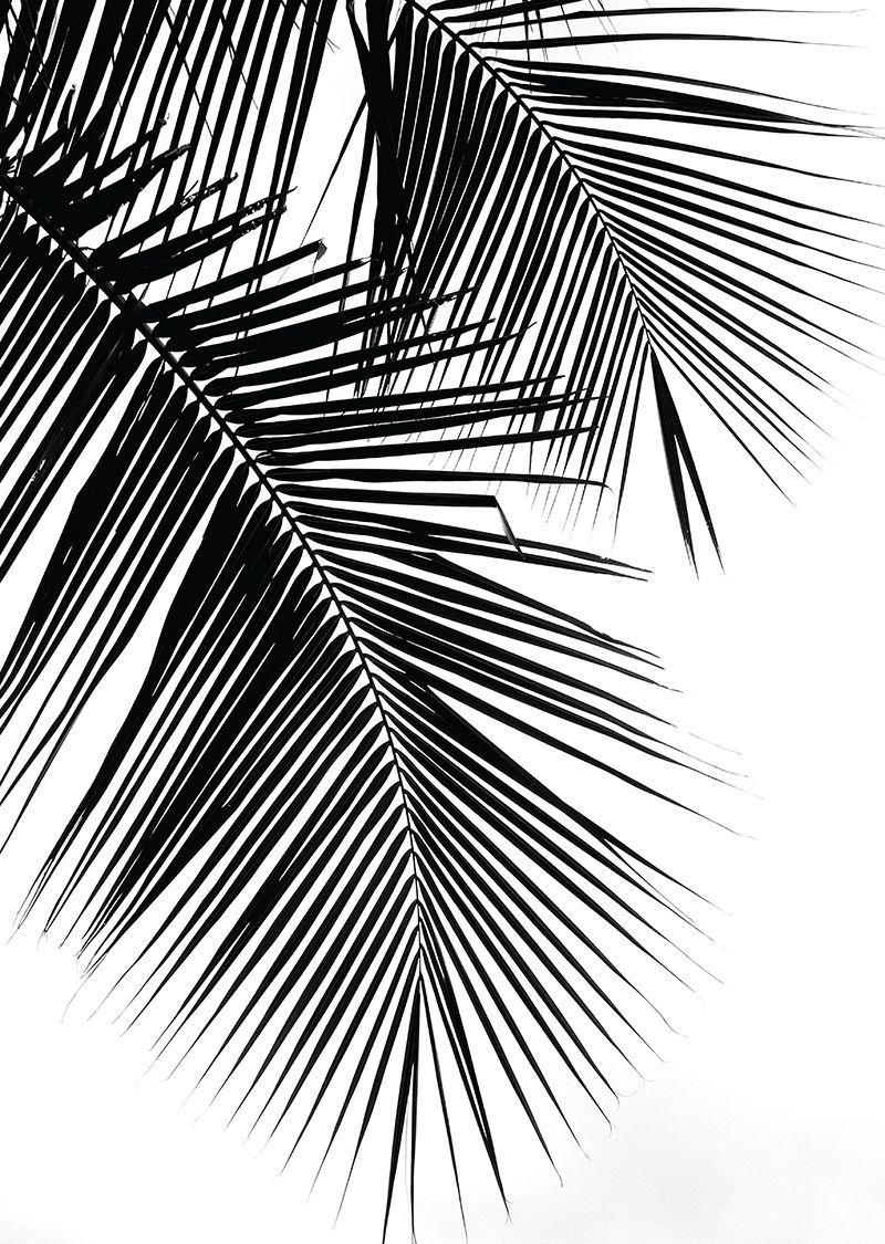 Palmier Noir Et Blanc En 2020 Tableau Noir Et Blanc Poster Noir Et Blanc Fond Noir Et Blanc