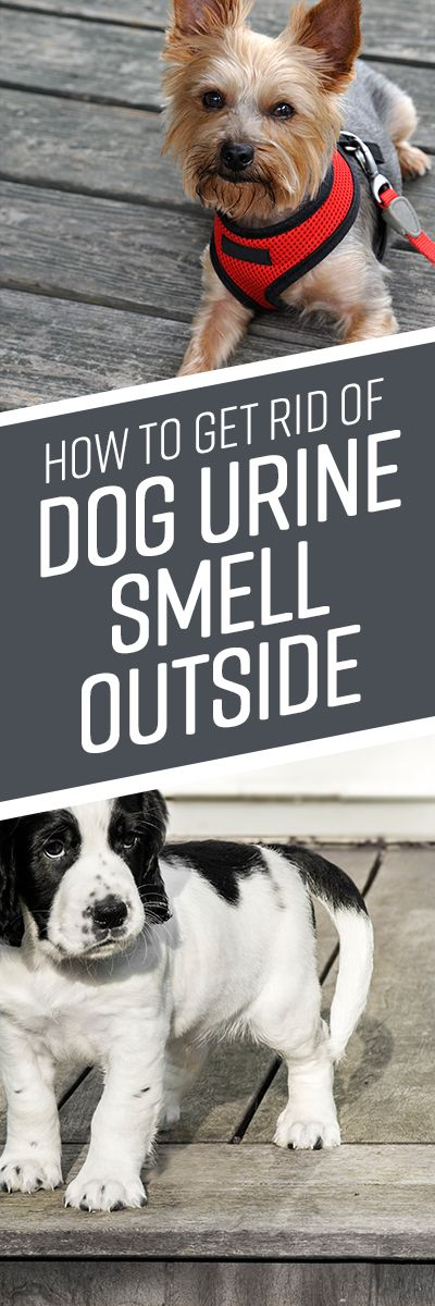 How To Get Rid Of Dog Urine Smell Outside Dog Urine Pets Dogs