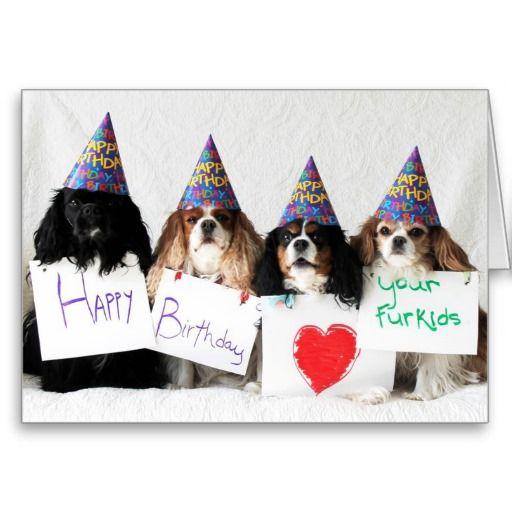 Happy Birthday From The Day Dog Cavaliers Card Zazzle Com Happy Birthday Dog Cavalier King Charles Spaniel Cavalier