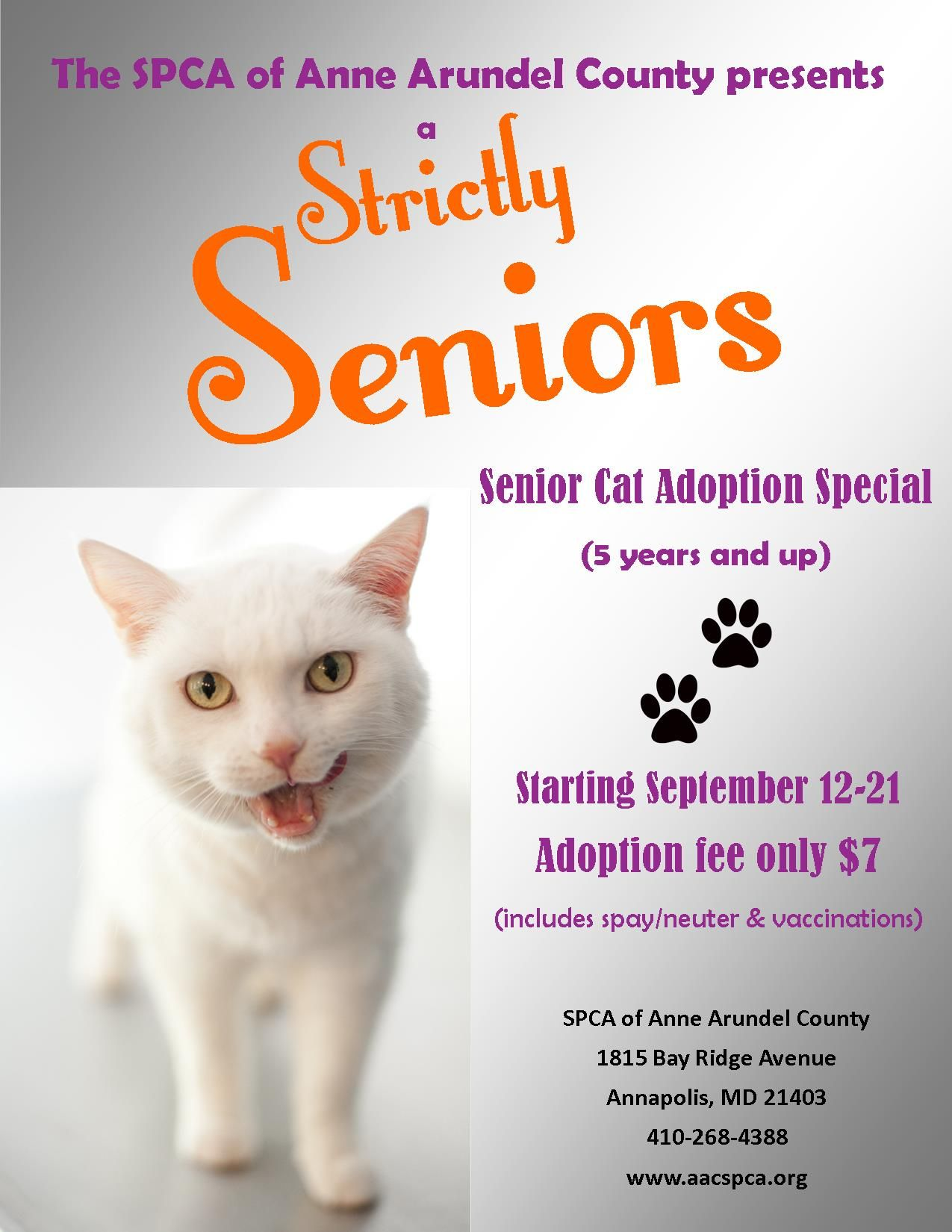 Senior Cat Adoption Special Cat Adoption Senior Cat Adoption