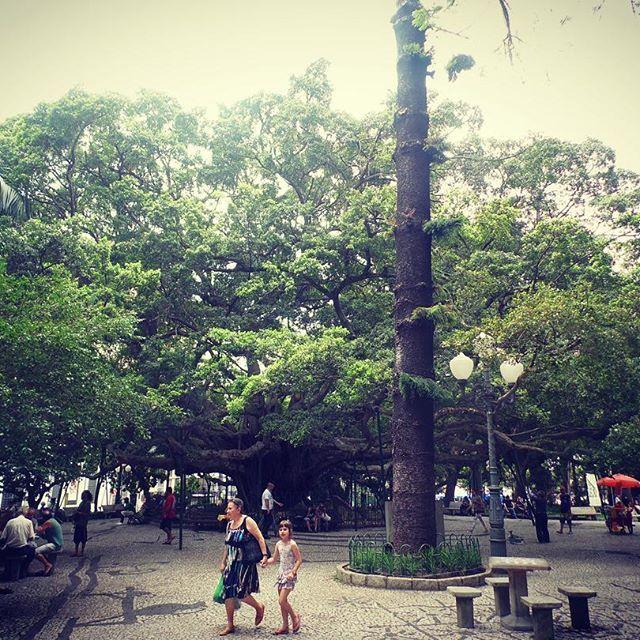Praça XV de novembro #uminstantemichele #floripaemfotos #amoflorianopolis