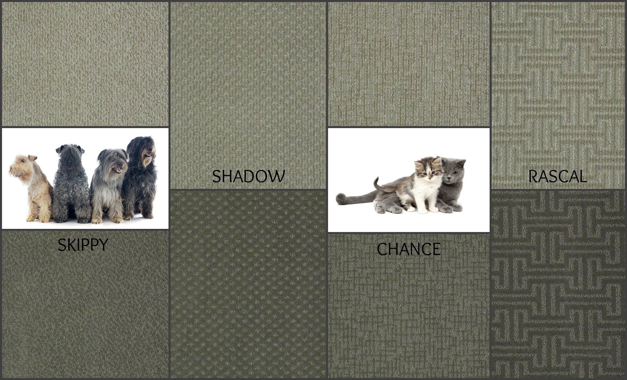 Skippy Shadow Chance And Rascal Carpet Featuring