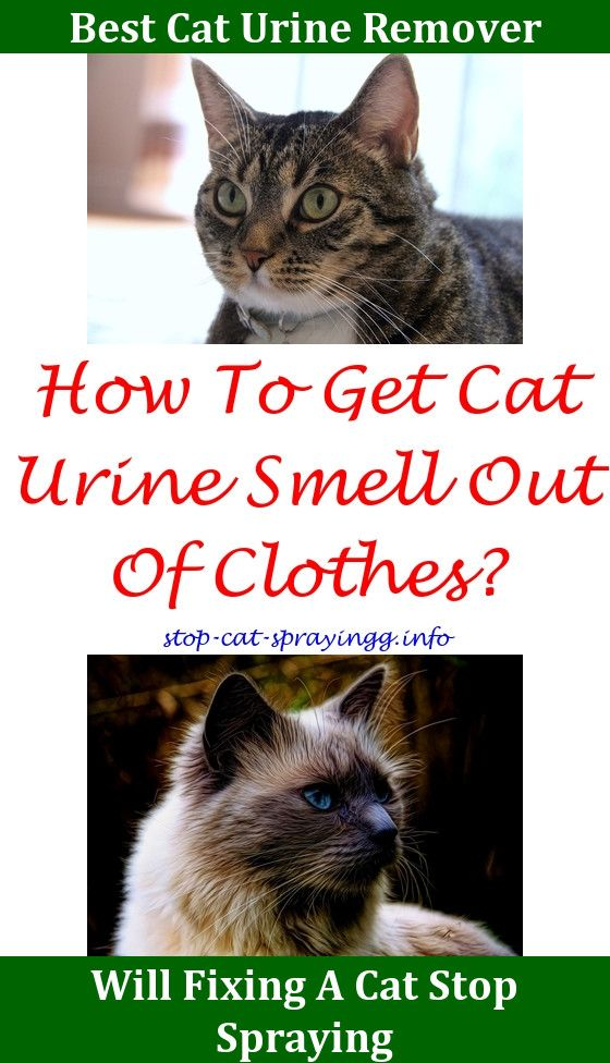 Cat Pee Out Of Couch Cleanses,get Off Spray For Cats Get Cat Pee Smell Out  Of Carpet.Male Cat Spraying Age Remove Cat Urine From Couch Cat Pee Out U2026