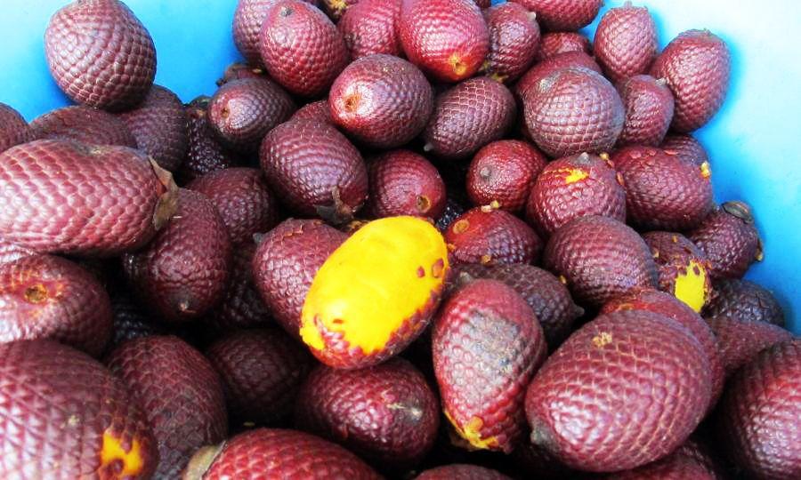 Most Weird Fruits 8