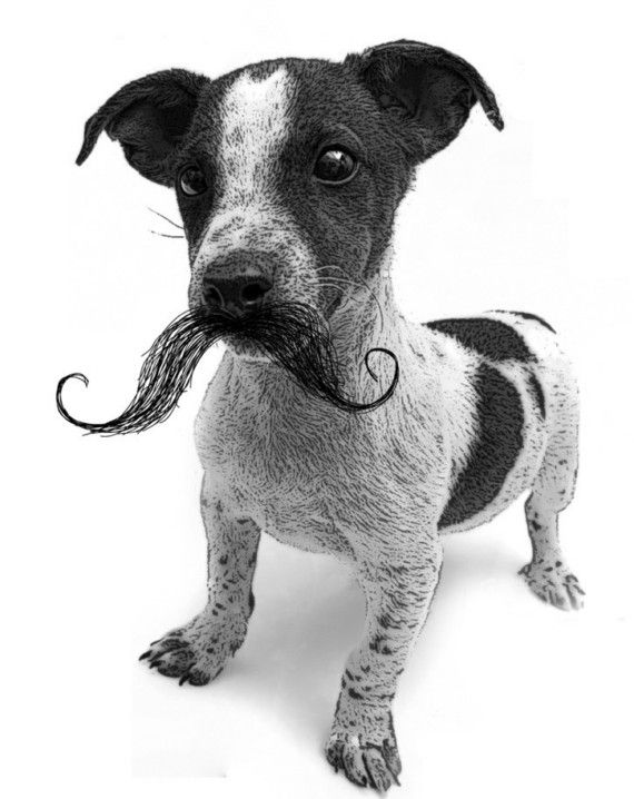Dogs Image By Formulary 55 Awesome Beards Mustache Wax Beard Love