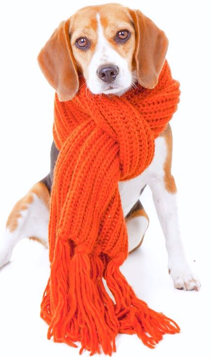 Well, at least his neck will be warm! Pet care tips, Pet