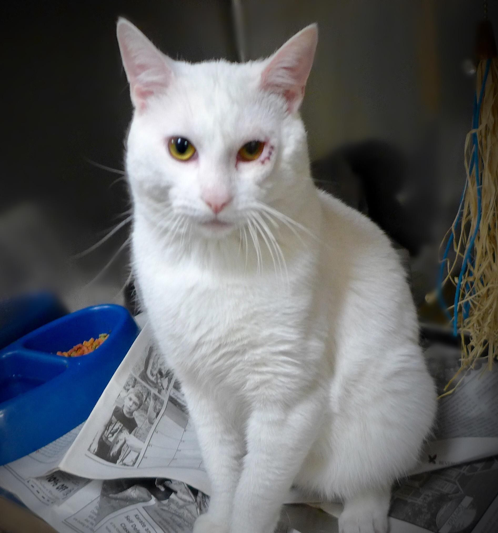 Adopt Dave 34969381 on Cat boarding, Adoption, Cats
